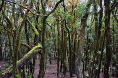 Foresta mistica Fotografia Stock Libera da Diritti