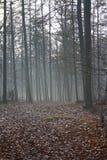 Foresta mistica Fotografie Stock