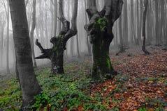 Foresta mistica. Fotografia Stock