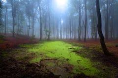 Foresta mistica durante il giorno nebbioso fotografia stock libera da diritti