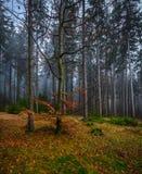 Foresta mistica terrificante con erba verde e gli alberi caduti variopinti immagine stock