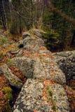 Foresta mistica triste scura nelle montagne con le rocce enormi nella priorità alta Le pietre, le radici degli alberi e la terra  Fotografia Stock