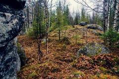 Foresta mistica triste scura nelle montagne con le rocce enormi nella priorità alta Le pietre, le radici degli alberi e la terra  Immagini Stock Libere da Diritti
