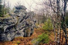 Foresta mistica triste scura nelle montagne con le rocce enormi nella priorità alta Le pietre, le radici degli alberi e la terra  Fotografia Stock Libera da Diritti