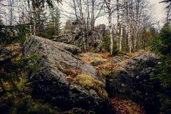 Foresta mistica triste scura nelle montagne con le rocce enormi nella priorità alta Le pietre, le radici degli alberi e la terra  Immagine Stock Libera da Diritti