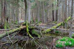 Foresta mixed bagnata di primavera con acqua stagnante Fotografie Stock Libere da Diritti