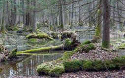 Foresta mixed bagnata di primavera con acqua stagnante Fotografia Stock Libera da Diritti