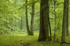 Foresta mixed naturale dopo pioggia Fotografie Stock Libere da Diritti