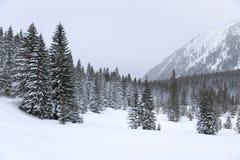 Foresta in montagne fotografie stock