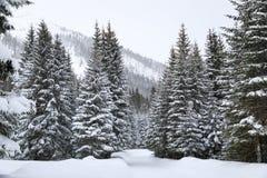 Foresta in montagne fotografia stock libera da diritti