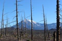 Foresta morta, vulcano di Tolbachik Immagini Stock Libere da Diritti