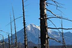 Foresta morta, vulcano di Tolbachik Fotografie Stock Libere da Diritti