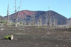 Foresta morta, vulcano di Tolbachik Fotografia Stock