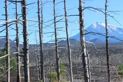Foresta morta, vulcano di Tolbachik Fotografie Stock