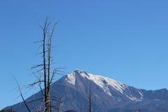 Foresta morta, vulcano di Tolbachik Fotografia Stock Libera da Diritti