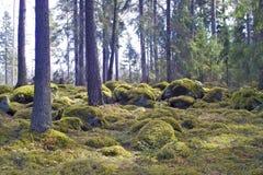 Foresta muscosa Immagini Stock
