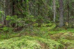 Foresta muscosa verde con l'albero morto Immagine Stock