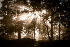 Foresta Mystical Fotografie Stock Libere da Diritti