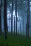 Foresta Mystical Fotografie Stock