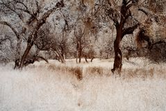 Foresta Mystical fotografia stock