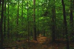 Foresta naturale con il passaggio fotografia stock