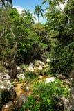 Foresta naturale cubana Immagini Stock Libere da Diritti