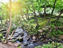 Foresta naturale verde nel parco di Nara Immagini Stock