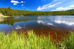 Foresta nazionale del Bighorn del lago Sibley Immagini Stock