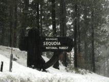 Foresta nazionale della sequoia fotografie stock