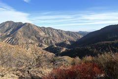 Foresta nazionale di Angeles fotografie stock libere da diritti