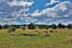 Foresta nazionale di Apache-Sitgreaves, Forest Service Road 51, Arizona, Stati Uniti fotografia stock