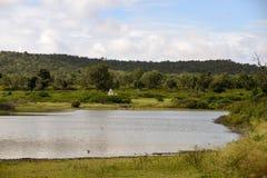 Foresta nazionale di Bandipur Immagini Stock Libere da Diritti