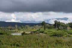 Foresta nazionale di Bandipur Immagine Stock Libera da Diritti