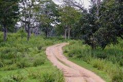 Foresta nazionale di Bandipur Fotografia Stock Libera da Diritti