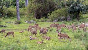 Foresta nazionale di Bandipur Fotografie Stock Libere da Diritti