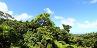 Foresta nazionale di EL Yunque Immagini Stock