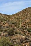 Foresta nazionale di Tonto, Arizona U S Ministero dell'agricoltura Immagini Stock