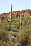 Foresta nazionale di Tonto, Arizona U S Ministero dell'agricoltura Fotografie Stock Libere da Diritti