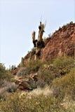 Foresta nazionale di Tonto, Arizona U S Ministero dell'agricoltura Fotografie Stock