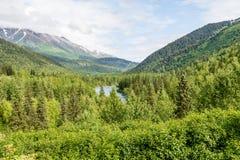 Foresta nazionale nell'Alaska Fotografia Stock
