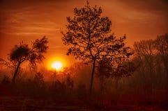 Foresta in nebbia Immagine Stock