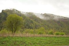 Foresta in nebbia Immagini Stock