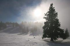 Foresta in nebbia Immagini Stock Libere da Diritti