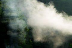 Foresta in nebbia e foschia di primo mattino fotografia stock libera da diritti