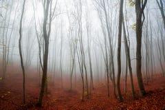 Foresta nebbiosa Immagine Stock Libera da Diritti