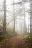 Foresta nebbiosa. Immagini Stock Libere da Diritti