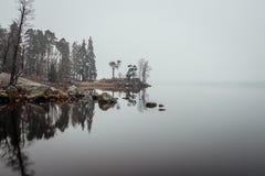 Foresta nebbiosa Fotografie Stock