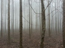 Foresta nebbiosa Fotografie Stock Libere da Diritti