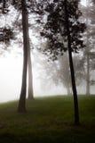 Foresta nebbiosa Immagine Stock