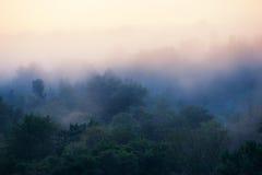 Foresta nebbiosa in anticipo di mattina Fotografie Stock Libere da Diritti